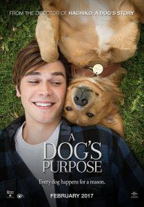 点击播放《一条狗的使命》